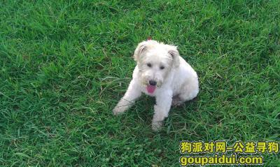 """寻狗启示,""""lucky""""于2018年6月19日在铁牛广场巡特警一大队与永拓洋楼B栋出口附近走失,它是一只非常可爱的宠物狗狗,希望它早日回家,不要变成流浪狗。"""