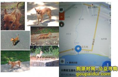 玉溪寻狗启示,请社会各界帮寻棕黄色小狗,它是一只非常可爱的宠物狗狗,希望它早日回家,不要变成流浪狗。