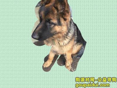 铜陵找狗,在铜陵寻找一只德国牧羊犬,它是一只非常可爱的宠物狗狗,希望它早日回家,不要变成流浪狗。
