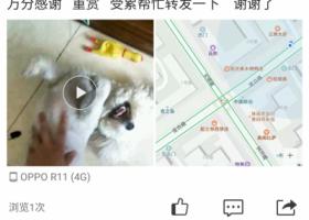 寻狗启示,天津河北区宜白路移动营业厅附近,它是一只非常可爱的宠物狗狗,希望它早日回家,不要变成流浪狗。
