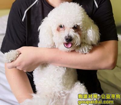 莱芜找狗,18.6.20晚在莱芜新市医院附近走失比熊犬一只,它是一只非常可爱的宠物狗狗,希望它早日回家,不要变成流浪狗。