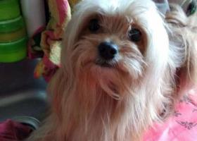 寻狗启示,重金寻找爱犬 恳请好心人与我联系,它是一只非常可爱的宠物狗狗,希望它早日回家,不要变成流浪狗。