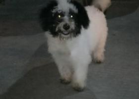 寻狗启示,厦门思明区城职捡到黑白狗一只,它是一只非常可爱的宠物狗狗,希望它早日回家,不要变成流浪狗。