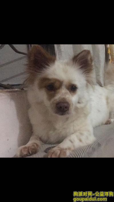 ,在茂南区官山路北中区走丢了一只串串,它是一只非常可爱的宠物狗狗,希望它早日回家,不要变成流浪狗。
