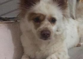 寻狗启示,在茂南区官山路北中区走丢了一只串串,它是一只非常可爱的宠物狗狗,希望它早日回家,不要变成流浪狗。