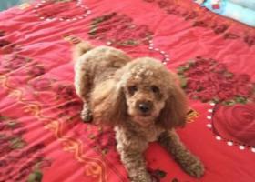 寻狗启示,寻狗启示 请求咸阳同城好心人帮忙找到爱狗 必有重谢,它是一只非常可爱的宠物狗狗,希望它早日回家,不要变成流浪狗。