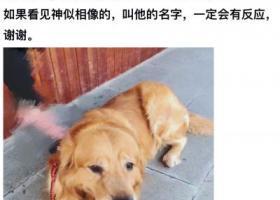寻狗启示,南京珠江路寻大金毛laughing,它是一只非常可爱的宠物狗狗,希望它早日回家,不要变成流浪狗。