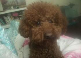 寻狗启示,爱犬已经找到,它是一只非常可爱的宠物狗狗,希望它早日回家,不要变成流浪狗。
