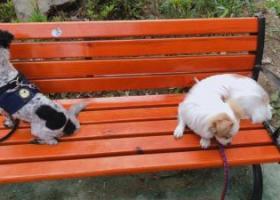 寻狗启示,浦东汇福家园丢脑袋黑色,身上白色加黑点点,屁股黑色,名字球球,它是一只非常可爱的宠物狗狗,希望它早日回家,不要变成流浪狗。