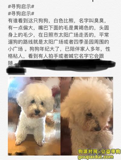 ,一条白色的比熊犬于今天下午在太阳公园附近走丢,它是一只非常可爱的宠物狗狗,希望它早日回家,不要变成流浪狗。