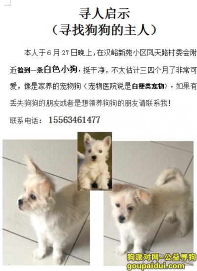 济南寻狗主人,在汉峪新苑小区凤天路村委会附近捡到一条白色小狗,它是一只非常可爱的宠物狗狗,希望它早日回家,不要变成流浪狗。