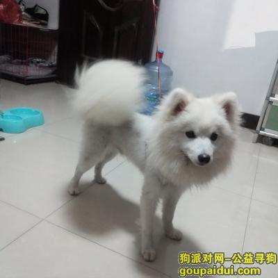 金华找狗主人,银狐找主人,金东区9月30在海棠西路捡到的,它是一只非常可爱的宠物狗狗,希望它早日回家,不要变成流浪狗。
