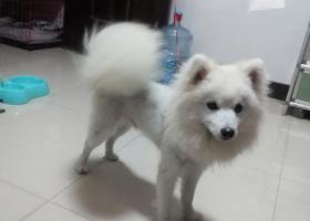 寻狗启示,银狐找主人,金东区9月30在海棠西路捡到的,它是一只非常可爱的宠物狗狗,希望它早日回家,不要变成流浪狗。