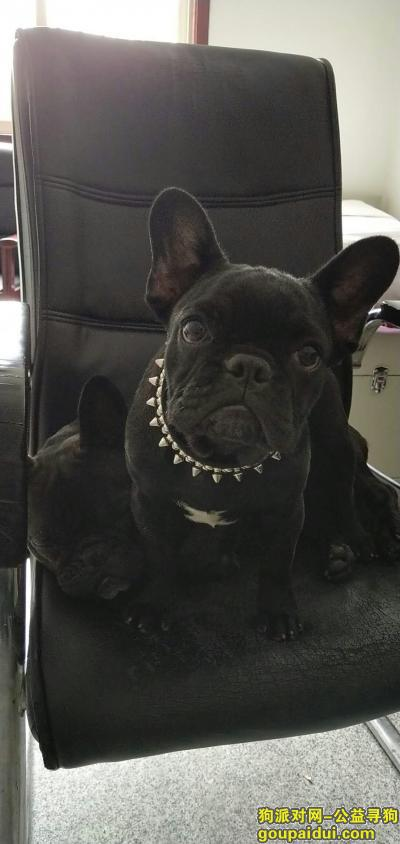 甘孜寻狗启示,寻两只在端午节丢失的黑色法,它是一只非常可爱的宠物狗狗,希望它早日回家,不要变成流浪狗。