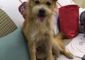 寻狗启示,3000元有偿寻小土狗旺财,它是一只非常可爱的宠物狗狗,希望它早日回家,不要变成流浪狗。