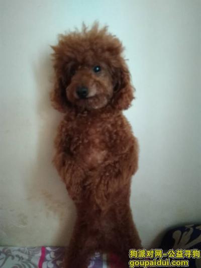 丹东寻狗启示,丹东市益荣家园丢失一只泰迪犬。,它是一只非常可爱的宠物狗狗,希望它早日回家,不要变成流浪狗。