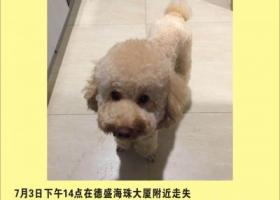 寻狗启示,东莞虎门寻香槟色泰迪,它是一只非常可爱的宠物狗狗,希望它早日回家,不要变成流浪狗。