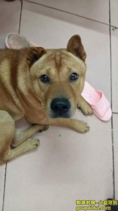 ,请各位帮帮忙!!找找这只狗狗,它是一只非常可爱的宠物狗狗,希望它早日回家,不要变成流浪狗。