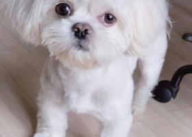 寻狗启示,我家京巴7月5日17点,它是一只非常可爱的宠物狗狗,希望它早日回家,不要变成流浪狗。