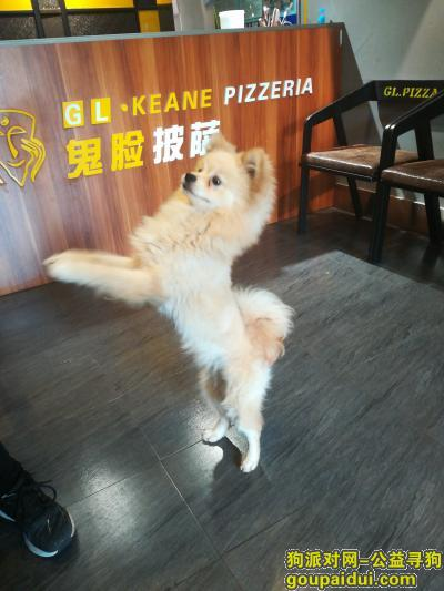 洛阳寻狗主人,涧西区上海市场牡丹路这,它是一只非常可爱的宠物狗狗,希望它早日回家,不要变成流浪狗。