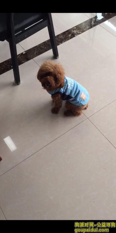 滁州丢狗,寻狗启示 狗狗对我很重要 大家帮忙找找,它是一只非常可爱的宠物狗狗,希望它早日回家,不要变成流浪狗。