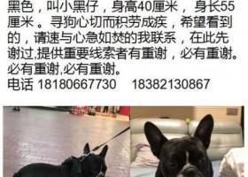 寻狗启示,成都市航空港走失黑色法斗,它是一只非常可爱的宠物狗狗,希望它早日回家,不要变成流浪狗。