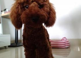 寻狗启示,amli很好看家人喜欢,它是一只非常可爱的宠物狗狗,希望它早日回家,不要变成流浪狗。