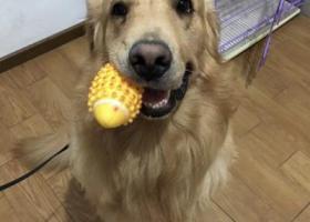 寻狗启示,重庆江津寻狗启示,必有重谢,它是一只非常可爱的宠物狗狗,希望它早日回家,不要变成流浪狗。
