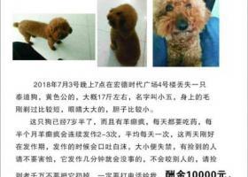 寻狗启示,上海宏徳时代广场4号楼酬谢一万元寻找泰迪,它是一只非常可爱的宠物狗狗,希望它早日回家,不要变成流浪狗。