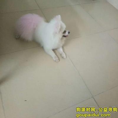 珠海找狗主人,寻找狗狗主人(在珠海市香洲区南屏镇洪湾港红东市场),它是一只非常可爱的宠物狗狗,希望它早日回家,不要变成流浪狗。