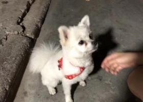 寻狗启示,在汇泽公园捡到狗狗7.10,它是一只非常可爱的宠物狗狗,希望它早日回家,不要变成流浪狗。