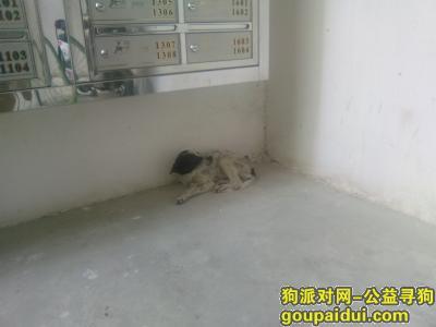 中山捡到狗,有哪位好心人愿意收留这只流浪狗!,它是一只非常可爱的宠物狗狗,希望它早日回家,不要变成流浪狗。