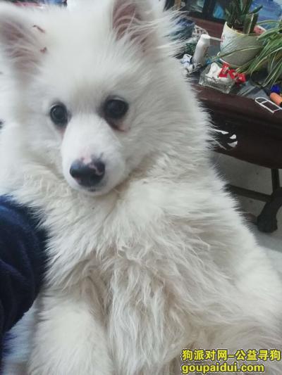 玉溪找狗,今天在澄江县凤麓菜市场走丢了,它是一只非常可爱的宠物狗狗,希望它早日回家,不要变成流浪狗。