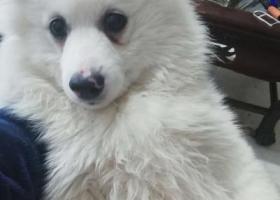 寻狗启示,今天在澄江县凤麓菜市场走丢了,它是一只非常可爱的宠物狗狗,希望它早日回家,不要变成流浪狗。