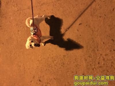 【连云港找狗】,寻爱狗比熊。脖子上有根红绳,左后腿瘸的,它是一只非常可爱的宠物狗狗,希望它早日回家,不要变成流浪狗。