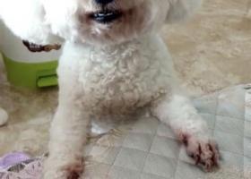 寻狗启示,海淀区小南庄社区丢失狗,它是一只非常可爱的宠物狗狗,希望它早日回家,不要变成流浪狗。