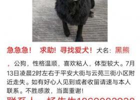 寻狗启示,15号出现在广州市三元里合益街  联系电话18620839384,它是一只非常可爱的宠物狗狗,希望它早日回家,不要变成流浪狗。
