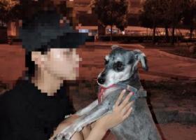 寻狗启示,寻狗启示,浙江省杭州市江干区富亿中心,它是一只非常可爱的宠物狗狗,希望它早日回家,不要变成流浪狗。