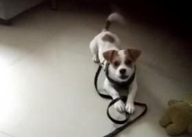 寻狗启示,7月15日早上7点在福永桥南丢失,它是一只非常可爱的宠物狗狗,希望它早日回家,不要变成流浪狗。