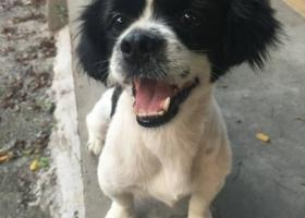 寻狗启示,东莞范围内寻找狗主人,它是一只非常可爱的宠物狗狗,希望它早日回家,不要变成流浪狗。