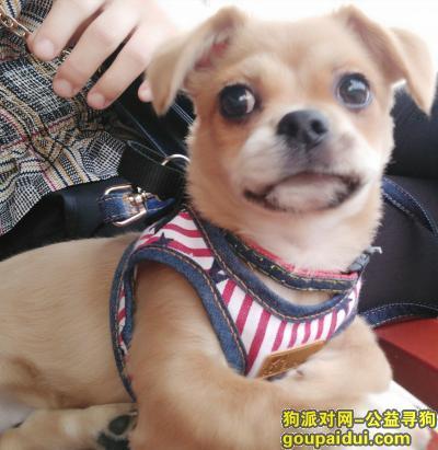 寻狗启示,寻找刚走丢的小母狗狗,它是一只非常可爱的宠物狗狗,希望它早日回家,不要变成流浪狗。