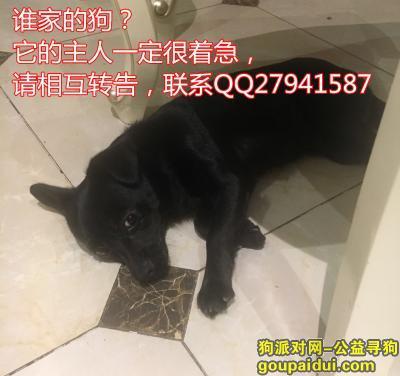 寻狗启示,成都捡到黑色小狗一只,它是一只非常可爱的宠物狗狗,希望它早日回家,不要变成流浪狗。