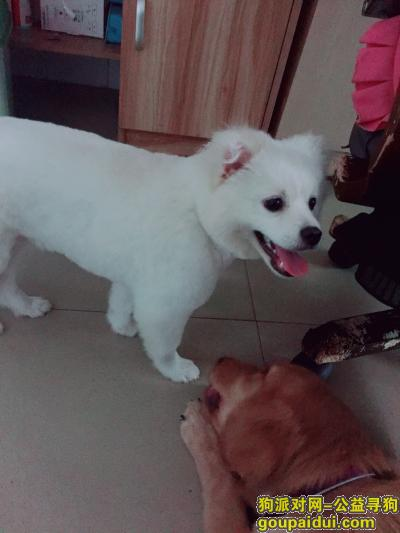 寻狗启示,龙岗大浪路口走丢爱犬一只,如图,有知情人士请联系我,必有重谢,它是一只非常可爱的宠物狗狗,希望它早日回家,不要变成流浪狗。