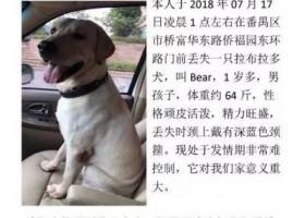 寻狗启示,寻找Bear,狗狗赶紧回家!!!!!,它是一只非常可爱的宠物狗狗,希望它早日回家,不要变成流浪狗。