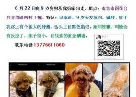 寻狗启示,南京市雨花台共青团路四村酬谢五千元寻找9岁泰迪,它是一只非常可爱的宠物狗狗,希望它早日回家,不要变成流浪狗。