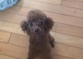 寻狗启示,青岛找狗小型犬泰迪于2018年7月17日走失,它是一只非常可爱的宠物狗狗,希望它早日回家,不要变成流浪狗。