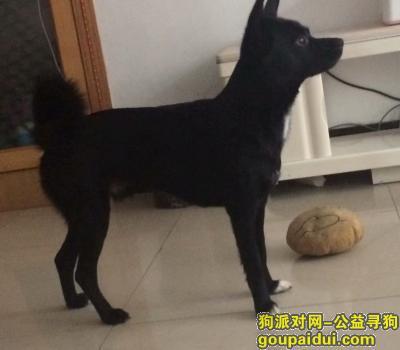 ,7月20号  化工小区附近走丢的希望有好心人看见及时联系18796210204,它是一只非常可爱的宠物狗狗,希望它早日回家,不要变成流浪狗。
