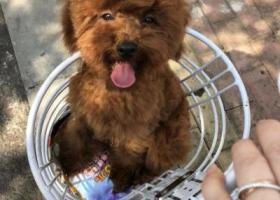 寻狗启示,寻找狗狗,狗狗赶紧回家!!!,它是一只非常可爱的宠物狗狗,希望它早日回家,不要变成流浪狗。