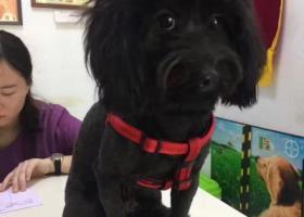寻狗启示,寻狗启示 黑色串串一枚,它是一只非常可爱的宠物狗狗,希望它早日回家,不要变成流浪狗。