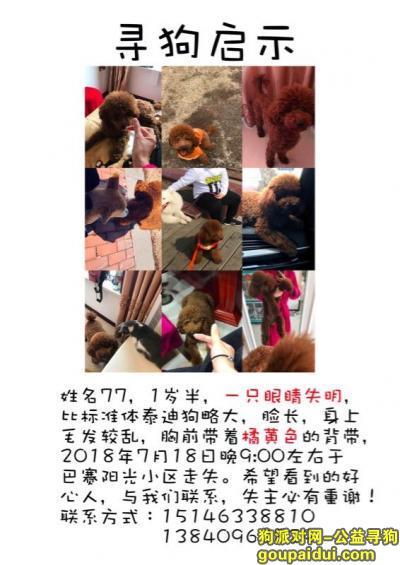牡丹江寻狗网,寻一只其中一只眼睛失明的泰迪公狗,它是一只非常可爱的宠物狗狗,希望它早日回家,不要变成流浪狗。